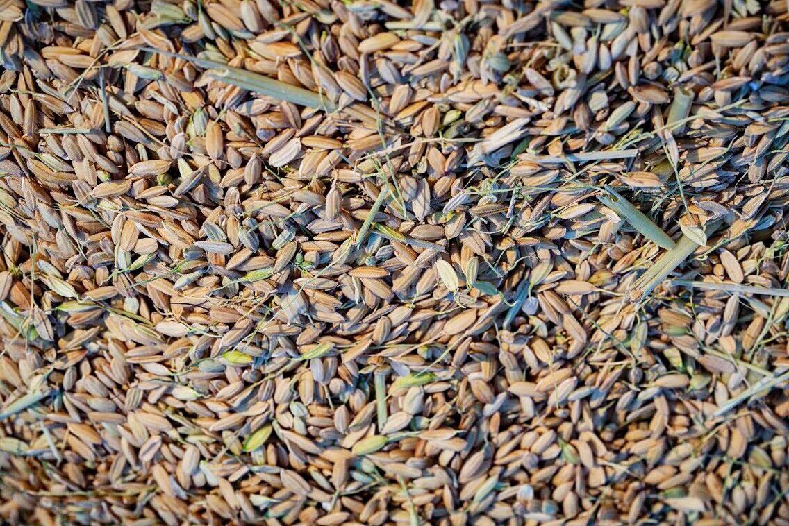 Pirinç Zeolit uygulması